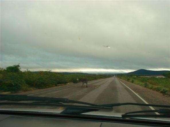 Burros e cabritos circulam por toda a estrada
