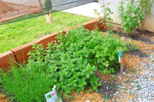 pequena horta no jardim : pequena horta no jardim:Arquivo da tag: hortas pequenas